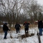 Bedford Tree Planitng