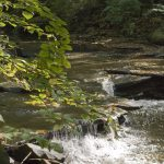 Doan Brook Gorge Hike with Dr. Roy Larick