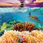Great Barrier Reef at the DOME Theater