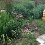 Rain Garden Maintenance