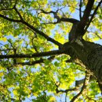 Growing Stories: Writing with Nature
