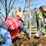 Understory Tree Planting