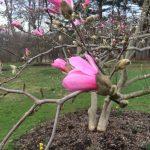 Spring Botany Hike