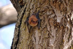 Bat Night at Lake View Cemetery