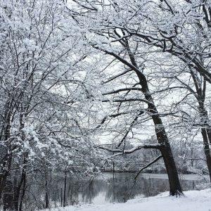 Winter Tree ID Hike