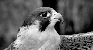 Art on View: Bird Portraits