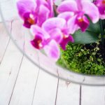 Tiny Gardens Orchid Terrarium Family Workshop