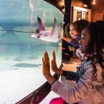 Winter Discount Weekend at Greater Cleveland Aquarium