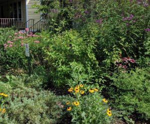 Bringing Nature Home: Designing a Native Garden