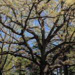 Bringing Nature Home: Trees
