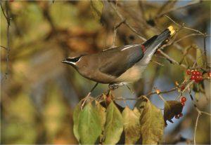 Bringing Nature Home: Gardening is for Birds (Postponed)