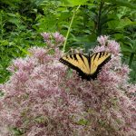 Bringing Nature Home: Right Plant, Right Place - Postponed