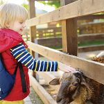 Family Fun Event at Hale Farm and Village: Pioneer Adventures: Building Our Community - Canceled