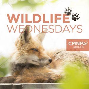 Wildlife Wednesday
