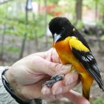 Meet Cleveland's Community Scientists: Ornithology