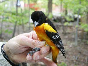Meet Cleveland's Community Scientists: Ornithology...