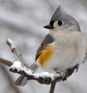 Introduction to Wildlife Photography: Birds