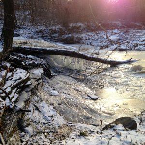 Doan Brook Winter Tree ID Hike