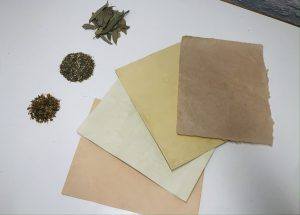 Dyeing Paper with Medicinal Plants