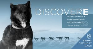 DiscoverE: Dogs of the Iditarod Trail