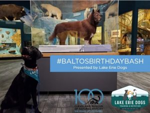Balto's Birthday Bash: Sit. Stay. Learn. Training Tips from Lake Erie Dogs