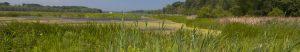 Vernal Pool & Aquatic Survey at Hadlock Preserve