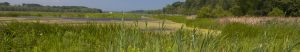 Family Hikes at Mentor Marsh: Forest Bioblitz