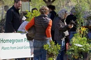 Homegrown Plant Sale