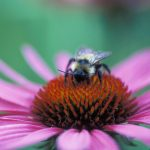 Pollinator Series: Bees and Pollinators at Home