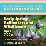Early Spring Pollinators and Wildflowers