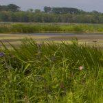 Family Hikes at Mentor Marsh: World Migratory Bird Celebration