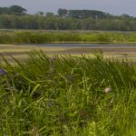 Family Hikes at Mentor Marsh: Woodland Escape
