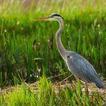 Guided Bird Walks
