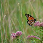 Butterfly Gardening Basics