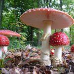Fall Mushroom Foray